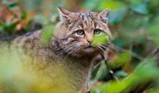 21 Katzen hat Robert Farmer getötet. (Foto)