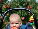 9. Monat Apfel essen (Foto)