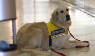 Epilepsiehund (Foto)