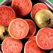 Guaven sind hierzulande eher weniger bekannt, dabei enthalten die Südfrüchte rund 300 Milligramm Vitamin C pro 100 Gramm.