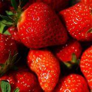 Mit ihrem vergleichsweise schon hohen Anteil an Vitamin C (bis zu 80 Milligramm auf 100 Gramm Frucht) sind Erdbeeren ein wichtiger Bestandteil gesunder Ernährung.