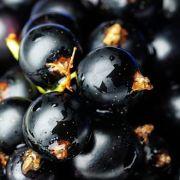 Schwarze Johannisbeeren sind die Vitamin-C-reichsten Beerenfrüchte.