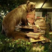 170 Jahre nach dem letzten Bär kam Bruno von Österreich herüber: