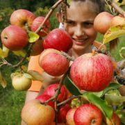 Äpfel liefern viel Vitamin C für die Produktion von Botenstoffen und enthalten jede Menge Antioxidantien, die freie Radikale bekämpfen und so die Gehirnzellen schützen.