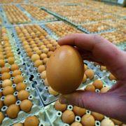 Das gute alte Ei liefert viel Lecithin. Aus dieser Fettsubstanz bestehen die Wände der Gehirnzellen.