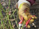 Gartenarbeit (Foto)