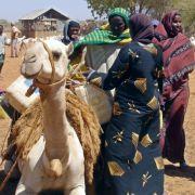 Nordostkenia: Glühende Hitze, sterbendes Vieh.
