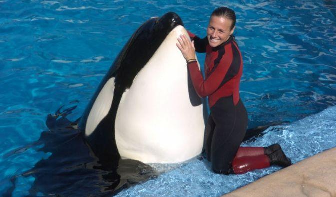 Die Orcas waren ihr Leben. Aber so nah sie sich den Tieren gefühlt haben mag, auch Dawn Brancheau hat sie nicht beherrscht. (Foto)