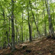 Forst wie der Wald. Dem ist nichts hinzuzufügen. Und grün beruhigt ja auch.