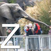 ... wie Zoo: Damit liegt man nie falsch, wenn man mit Kindern was unternehmen will. Und im Sommer fühlen sich die Elefanten auch ein kleines bisschen mehr zuhause.