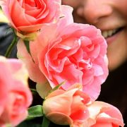 Die leuchtendrosa mit pfirsichfarbenem Hauch blühende Floribunda Rose des Züchters Robert Laperriere aus Frankreich wurde 2006 zur schönsten Rose gewählt.