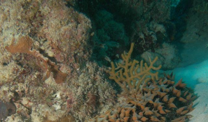 Wie viele Arten eigentlich genau in den Weltmeeren leben, möchten Forscher nun in einer gigantischen Volkszählung in den Ozeanen herausfinden. Zum Teil sehen die Meeresbewohner recht skurril aus.