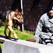 In Deutschland beißen Hunde. Auf der anderen Seite der Erde greifen sie auch schonmal zur Waffe. Und schießen ihr Herrchen ins Hinterteil.