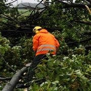 Straßenarbeiter zersägen am Freitag auf einer Landstraße bei Bad Salzuflen entwurzelte Bäume. Ein Tornado hinterließ am Donnerstagabend eine Schneise der Verwüstung. Zahlreiche Bäume wurden entwurzelt, Dachziegel umhergewirbelt, verletzt wurde niemand.