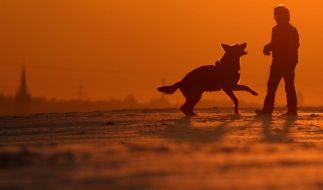 Immer mehr Jüngere verzichten aufs Haustier (Foto)