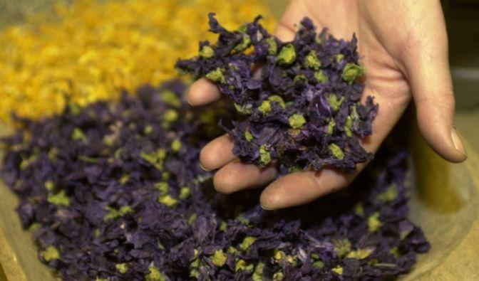 Bei Depressionen müssen nicht immer mit gefährlichen Tabletten behandelt werden. News.de zeigt, welche Heilpflanzen und alternativen Ansätze sich zur Selbsttherapie gegen die dunklen Wolken eignen.