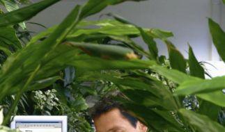 Grünes Büro (Foto)