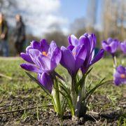 Für Wortspielfreunde: In den USA ist folgendes Wortspiel beliebt: Spring forward - fall back.