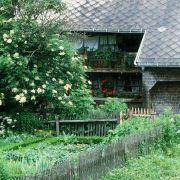 Keine pollenbildenden Bäume in Asthmatiker-Garten