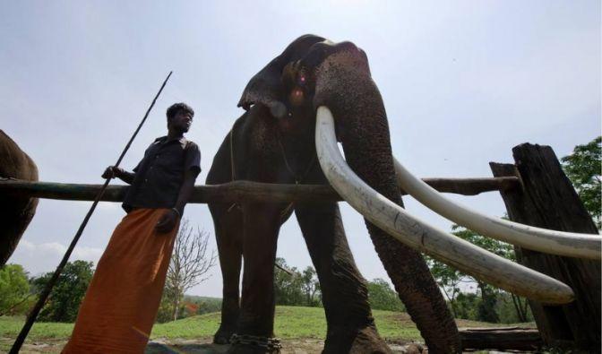 Indien Elefant (Foto)
