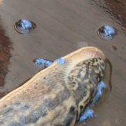 Sehr effizient ist Schneckenkorn. Wird das Mittel rechtzeitig im Frühjahr ausgebracht, ist es ein wirksamer Fraßköder und hält die Tiere ordentlich in Schach.