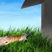 Auf kleinen Flächen ist ein Schneckenzaum sehr hilfreich. Er schützt den Garten vor unliebsamen Lochfraß durch die Schädlinge.