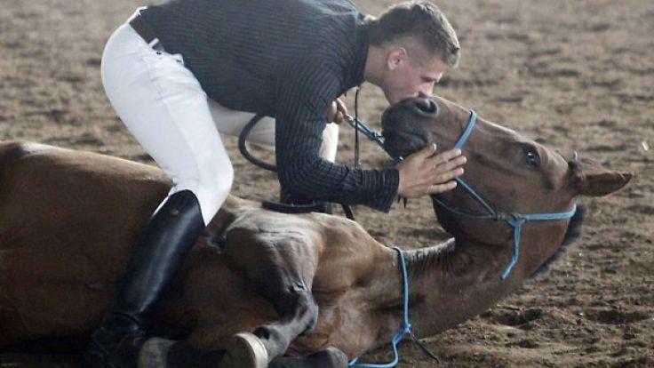 Pferd Spritzt Ab