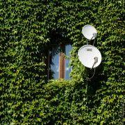 Efeu-Pflicht für neue Hausfassaden geplant (Foto)