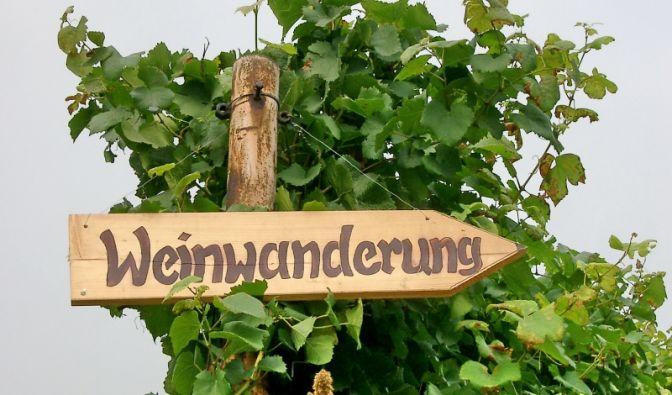 Wandern in deutschen Weinanbaugebieten (Foto)