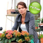 Anja Kling steht im ARD-Film Vom Ende der Liebe vor den Scherben ihrer Ehe.