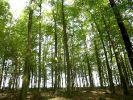 Pfälzer Wald (Foto)