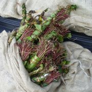 Platz 20: Die Kathpflanze wird hautpsächlich in Kenia, Oman, Jemen und Äthiopien angebaut. Sie hat ähnlich wie Kaffee eine aufmunternde Wirkung und kann bei übermäßigem Verzehr zu Schlaflosigkeit und Bluthochdruck führen.