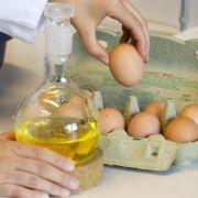 2012 wurden auf einem Bio-Hof schadstoffbelastete Eier gefunden.