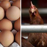 Dioxin über Futtermittel in Lebensmittel gelangt.