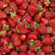 Serienmörder John Wayne Gacywünschte sich neben Shrimps, Huhn von Kentucky Fried Chicken und Pommes ein ganzes Pfund Erdbeeren.