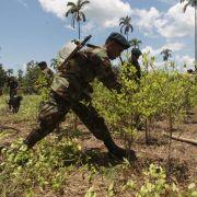 Auck Koka wird in der südamerikanischen Andenregion längst legal angebaut.