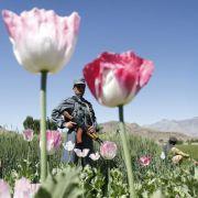 Fast die Hälfte des Opiums weltweit wird laut Transform, einer britischen Organisation, die sich für die Regulierung von Drogen einsetzt, bereits legal für Medikamente hergestellt.