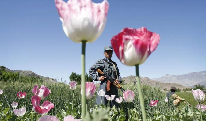 Fast die Hälfte des Opiums weltweit wird laut Transform, einer britischen Organisation, die sich für die Regulierung von Drogen einsetzt, bereits legal für Medikamente hergestellt. (Foto)