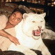 Die aufsehenerregendste Tigerattacke fand in Las Vegas statt. Die Tiger-Magier Siegfried  Roy standen wie jedem Abend auf der Bühne. Doch ausgerechnet an seinem 59. Geburtstag wurde Roy von seinem Tiger Montercore angegriffen.