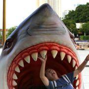 Der Weiße Hai ist vor allem durch den Horrorfilm von Steven Spielberg zum Menschenfresser stilisiert worden, seine Gefahr wird überschätzt.
