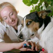 Akupunktur gegen die Pollenallergie, homöopathische Pillen, Prothesen und Rollwagen für Hunde mit Bandscheibenvorfall - wenn es um ihre Liebsten geht, kennen Tierbesitzer oftmals keine finanziellen Grenzen.
