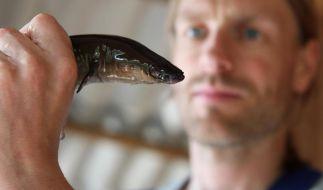In China musste ein 39-Jähriger von einem Aal befreit werden. (Foto)