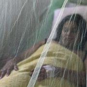 Obwohl die Sterblichkeitsrate bei Dengue-Fieber nur bis zu 15 Prozent beträgt, sterben jährlich 22.000 Menschen daran. Nach neuesten Untersuchungen infizieren sich rund 390 Millionen pro Jahr mit dem Virus.