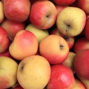 Der Deutschen beliebtestes Obst: der Apfel.