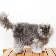 Colonel Meow ist die Katze mit dem längsten Fell.