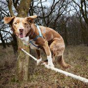Hund Ozzy schaffte es am schnellsten, die Leine auf allen vier Pfoten zu überqueren.