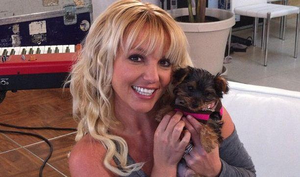 So sieht Glück aus: Mit der kleinen Hannah auf dem Arm strahlt Britney Spears über beide Ohren. (Foto)