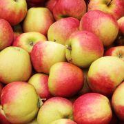 Was Läuse mit Äpfeln zu tun haben? Manches Obst ist gewachst, zum Beispiel mit dem Überzugsstoff Schellack (E904). Der Stoff wird aus den Ausscheidungen weiblicher Gummilackschildläuse gewonnen.