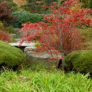 Im Herbst erstrahlen die Blätter in verschiedenen Rot- und Brauntönen. Dies hängt vor allem von dem Standort des Baumes ab.
