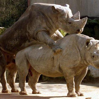 Wer kann am längsten? Diese Tiere sind wahre Sex-Monster (Foto)